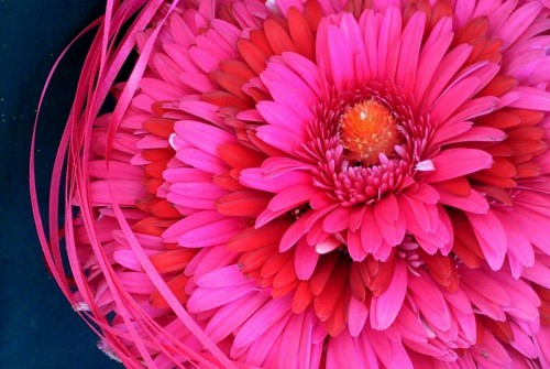 Wedding bouquets – gerberas